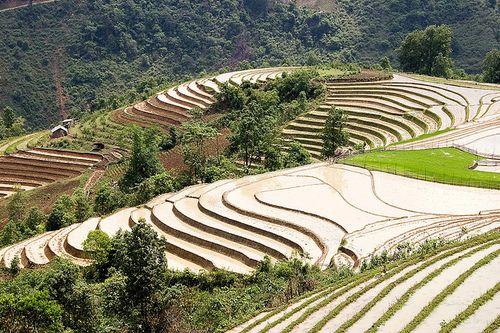 Террасные поля в Сапа, Вьетнам