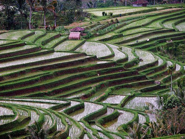 Террасы Бали