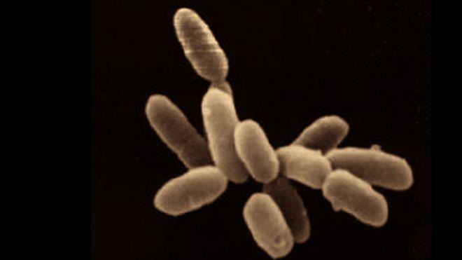 галобактерии Мертвого моря
