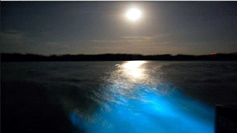 Биолюминесцентные лагуны.