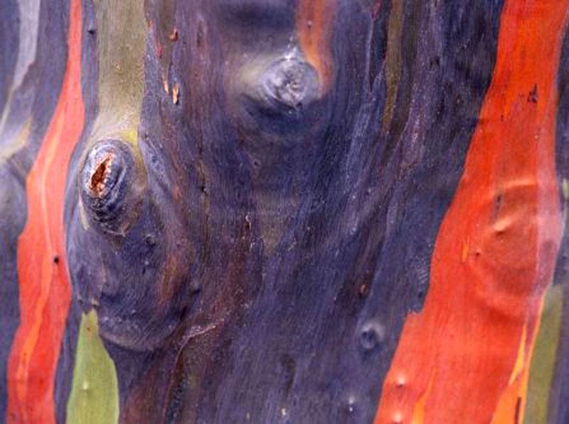 Радужное дерево.