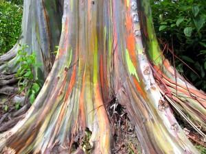 Радужное дерево3