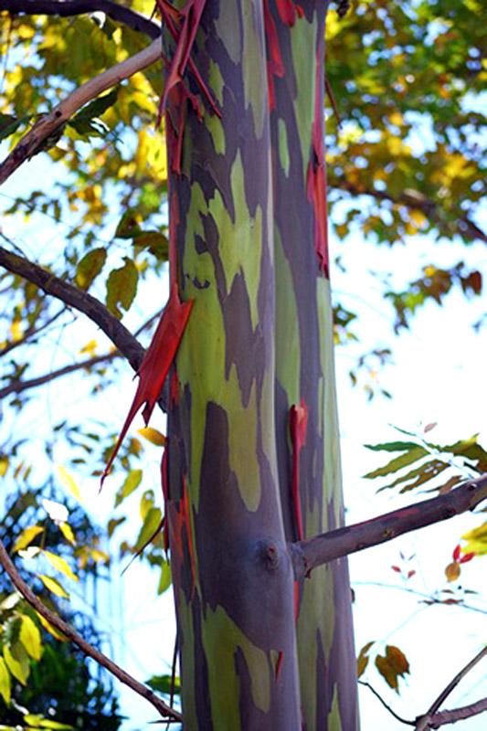 Радужное дерево5