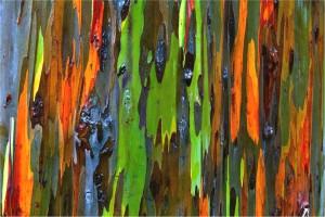Радужное дерево7