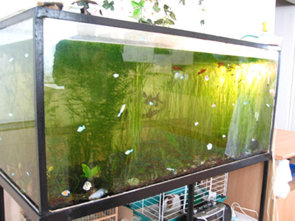 Донный фильтр в аквариуЁлочные игрушки своими руками