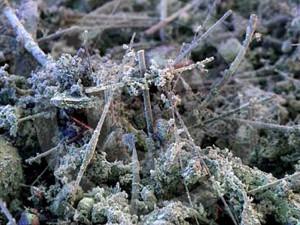 пыль под микроскопом